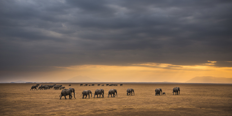 ELEPHANTS INTO THE FADING SUN, Amboseli, 2012