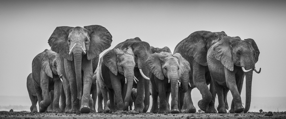 ELEPHANT FAMILY ON DRY LAKE, Amboseli, 2012