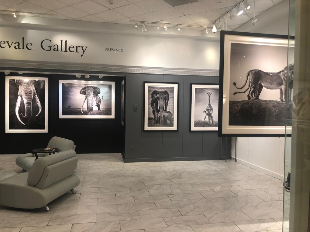 African-wildlife-limited-edition-prints-exhibition-Las-Vegas_02.JPG