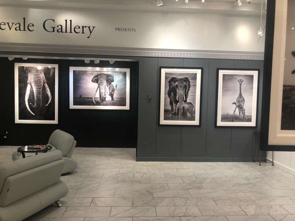 African-wildlife-limited-edition-prints-exhibition-Las-Vegas_03.JPG