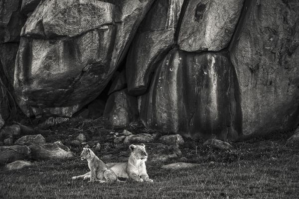 LIONESS WITH CUB AND ROCKY OUTCROP, Serengeti, 2018